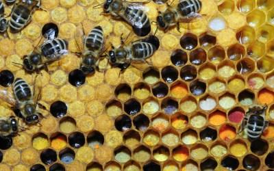 Le Rucher du Marandou organise un concours photo par mois, sur le thème de l'abeille.