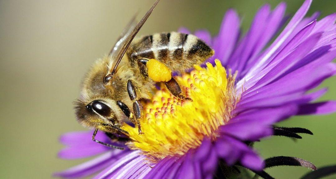 Abeille Rucher du Marandou miel ruche apiculture fleur Dordogne Périgord bienvenue à la ferme