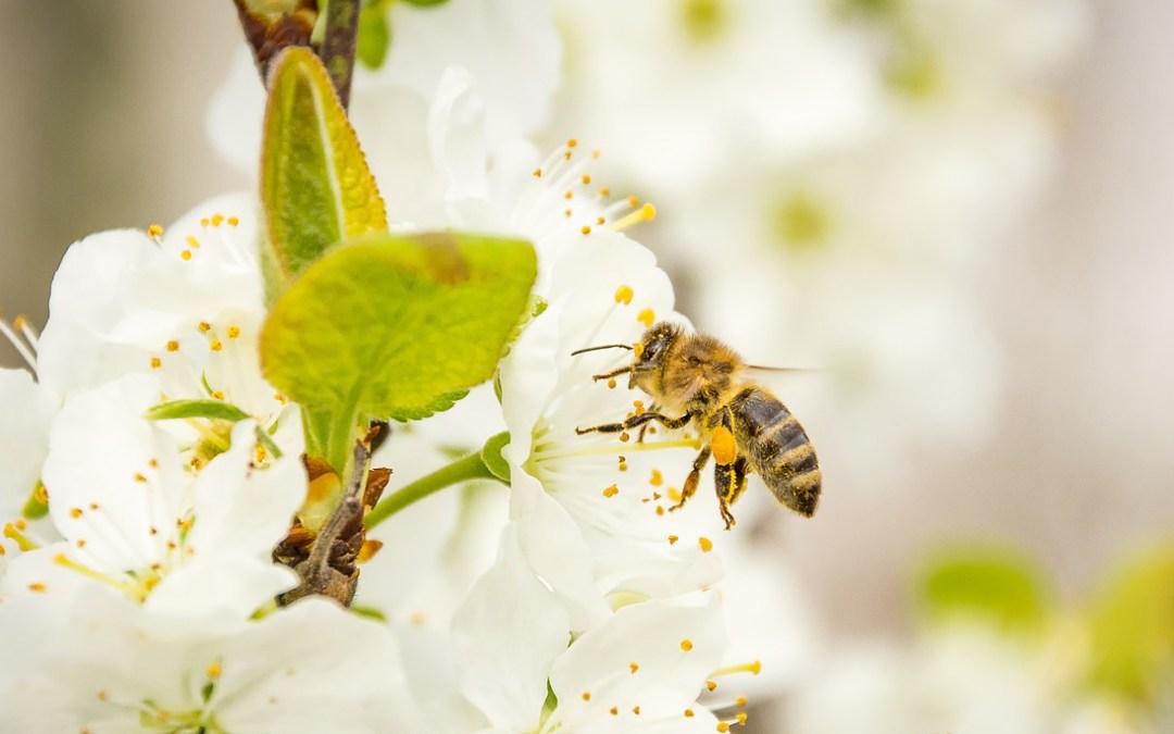 abeille abeilles le rucher du marandou dordogne Périgord Abeille Rucher du Marandou miel ruche apiculture fleur dordogne périgord bienvenue à la ferme