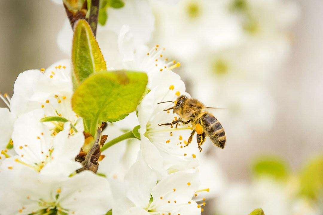 parrainage abeille le rucher du marandou dordogne Périgord