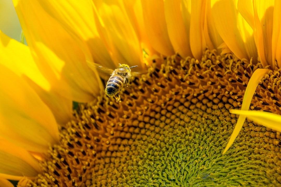 parrainage abeille le rucher du marandou