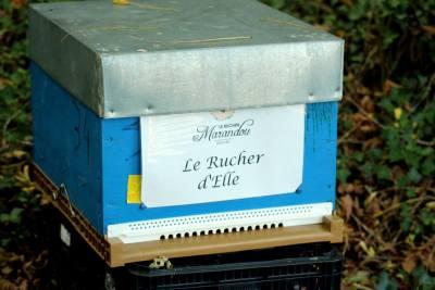 parrainer ruche 20 - rucher de marandou