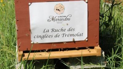 parrainer ruche 11 - rucher de marandou