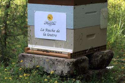 parrainer ruche 35 - rucher de marandou