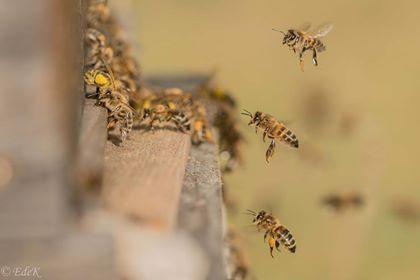 parrainage ruche le rucher du marandou
