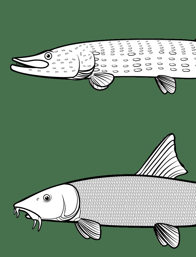 Fische (Vektorgraphik)