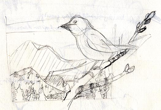 conceptual sketch for song sparrow