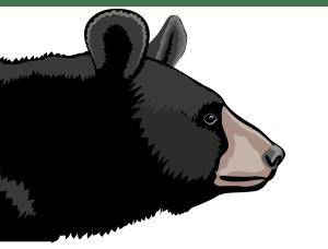 Detailausschnitt - Kragenbär (Ursus thibetanus)