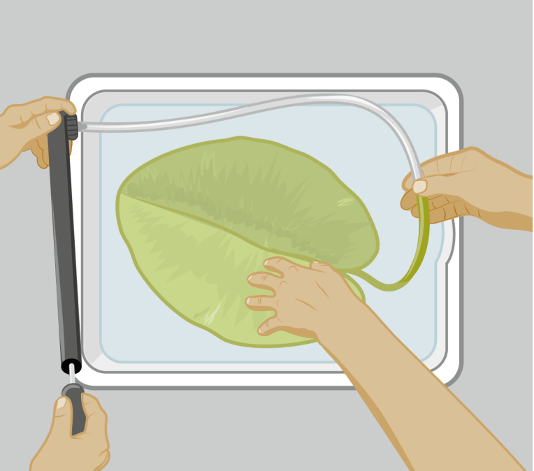 Vector illustration: Experimental set-up for analyzing the floating leaves of water-lily.