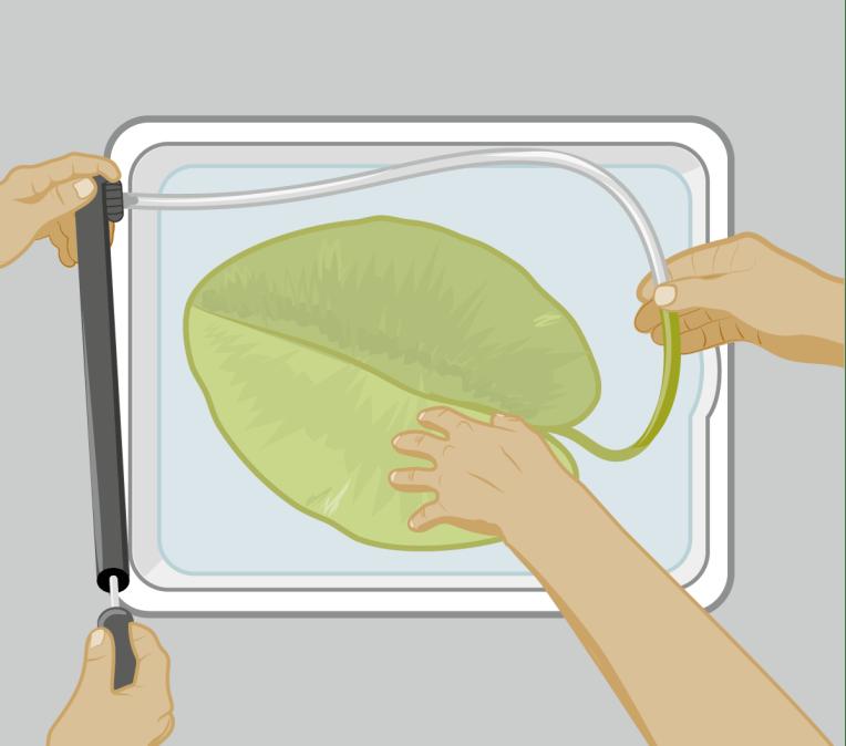 Vektorgrafik Illustration: Versuchsaufbau für Teichrose Schwimmblatt- Experiment