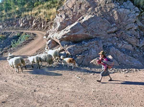 Junge Hirtin und ihre Schafe auf Schotterpiste vor den Inkaterassen