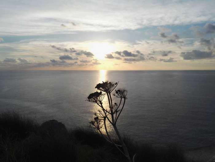 roślinność Malty