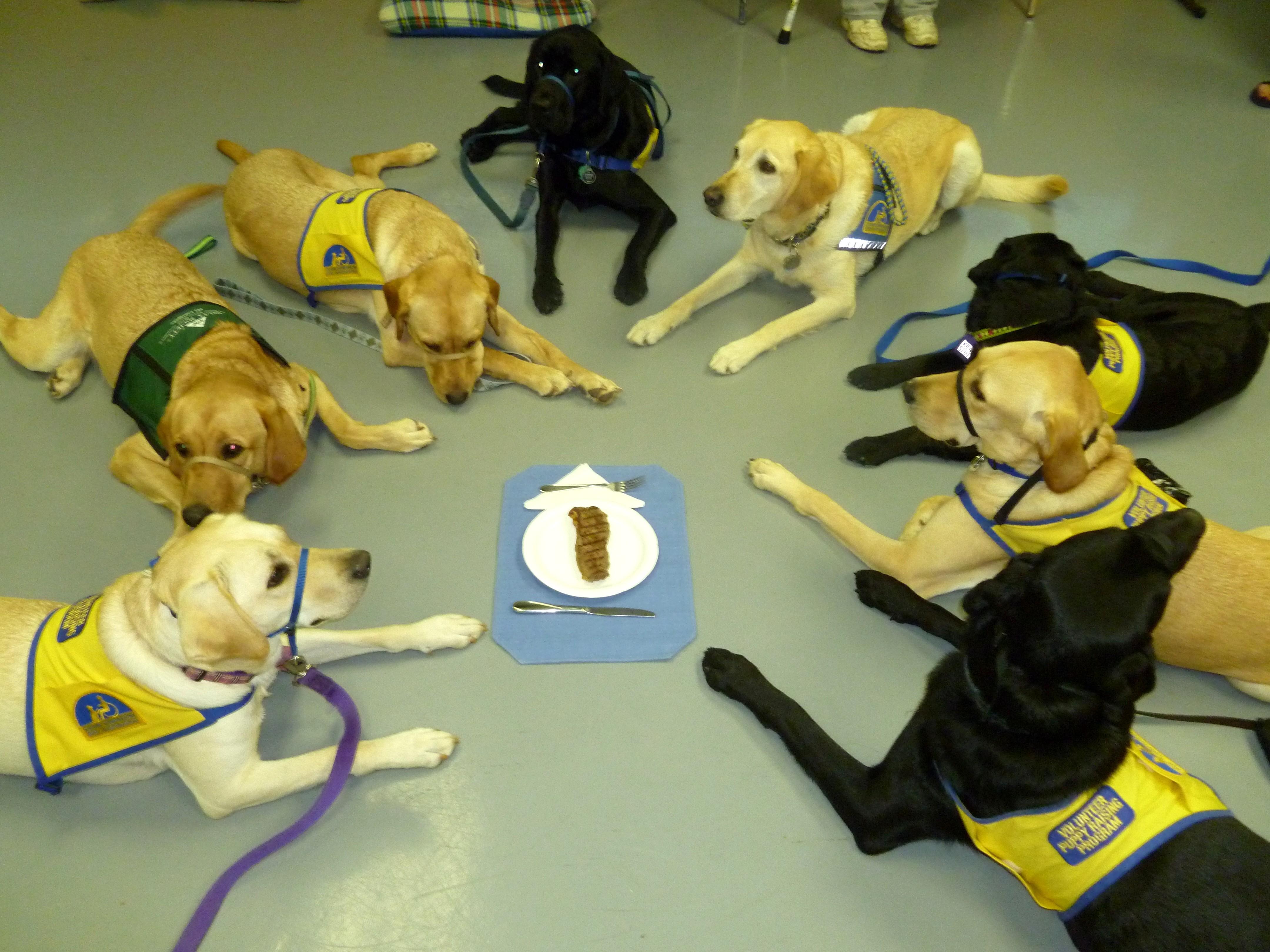 Practicing Self Control Rudy S Friends Dog Training Inc