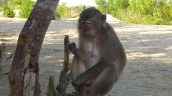 A monkey we met at Kuta beach