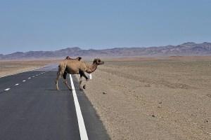 Fernstrasse in der Mongolei