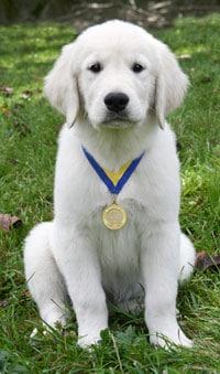 S.T.A.R. Puppy