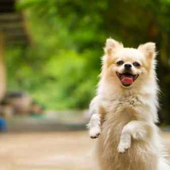 Happy dog jumping wagging feelings