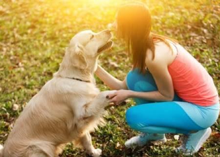 sit pretty dog with dog treat sitting pretty happy dog