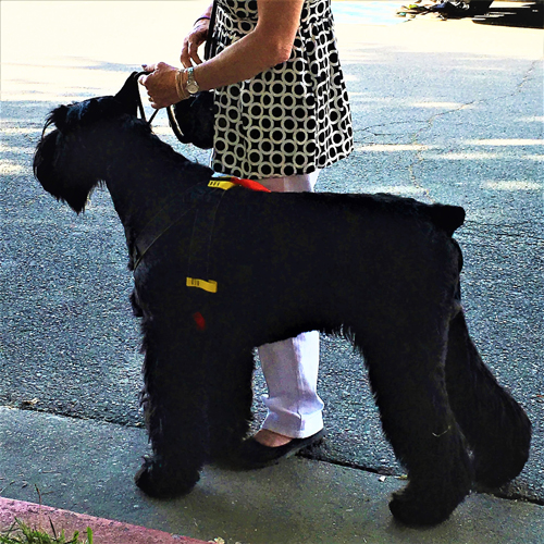 Giant Breed Safety Harness