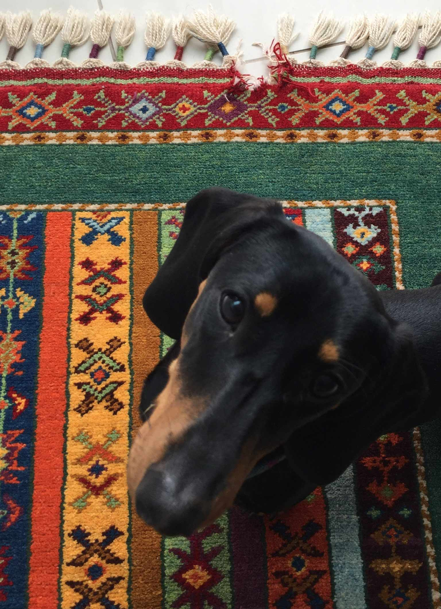 Turkish Rug Repair needed after pet Damage