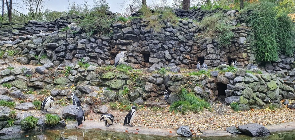 Pinguin Burgers Zoo