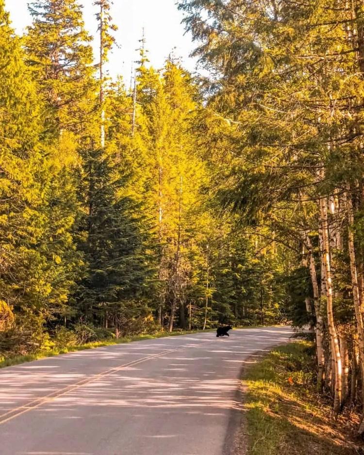 spring in glacier national park, glacier national park in spring, glacier national park in the spring,