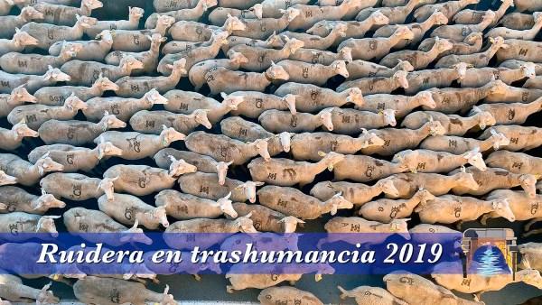 Ruidera en trashumancia 2019