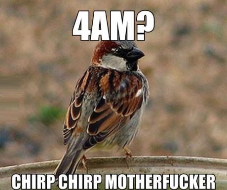 Image result for birds are assholes