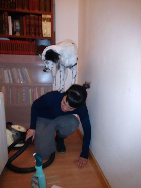 Heres Proof That Scaredy Dogs Are Funnier Than Scaredy Cats