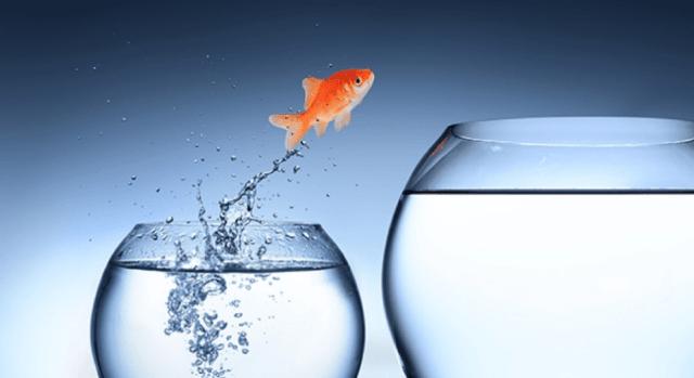 fish - Социальная ипотека - условия программ, государственная поддержка, особенности