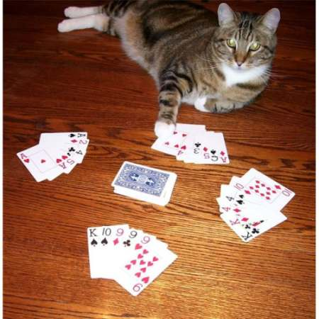 How to Play Go Fish Card Game and Win