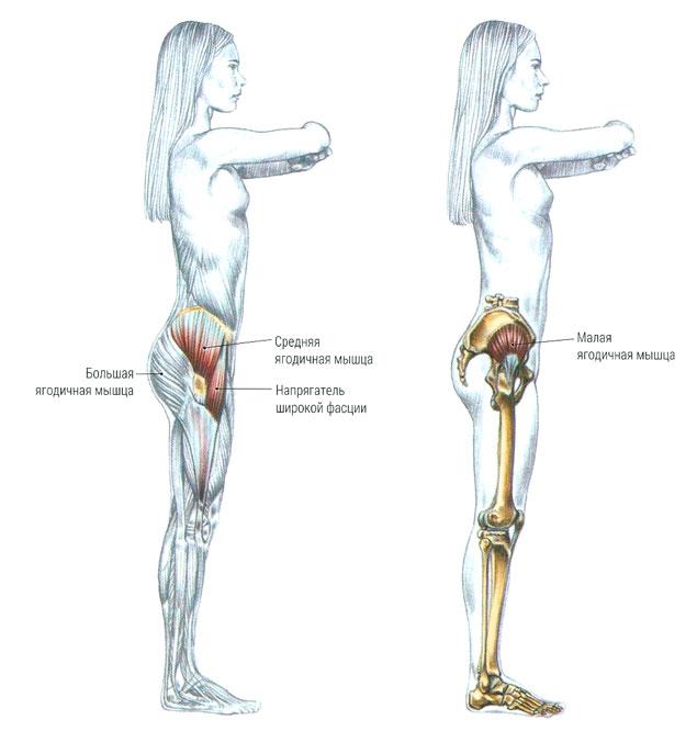 Целевые группы мышц