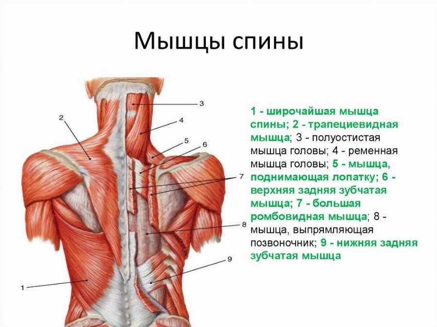 20 latihan dengan dumbbells pada semua kumpulan otot →