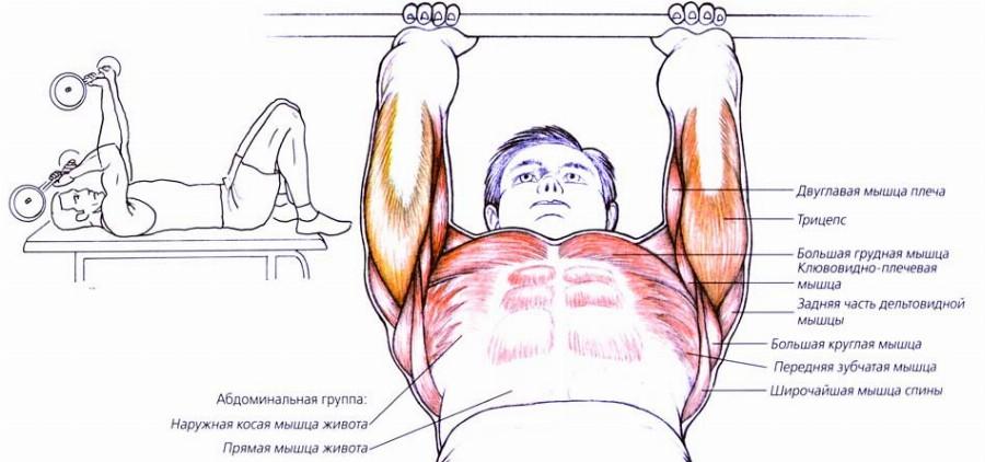 Muscoli attivi con la circonferenza francese