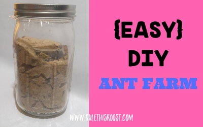 easy DIY ant farm for kids