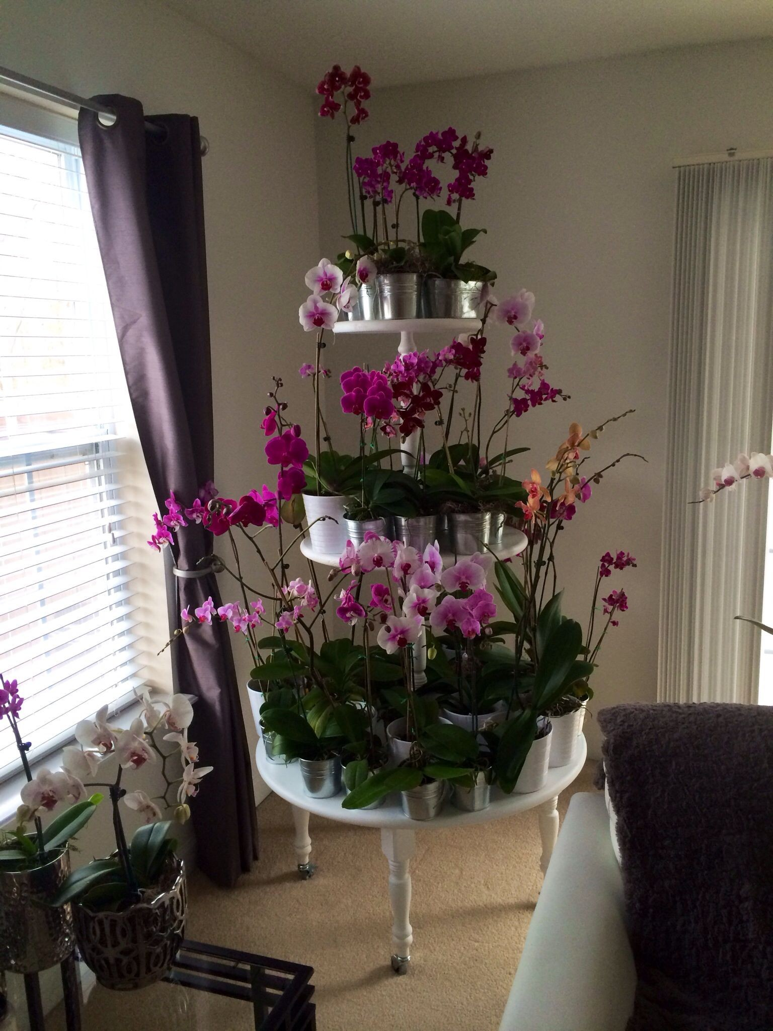Orchid plant stand What a wonderful idea