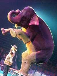 Circus Tarzan