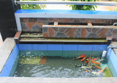 Kolam Ikan Kecil di Teras Depan Rumah