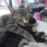 Adopsi Kucing Rofi