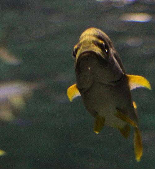 Fish-looking-at-me