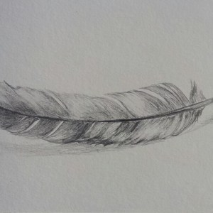 Pencil Feather Drawing