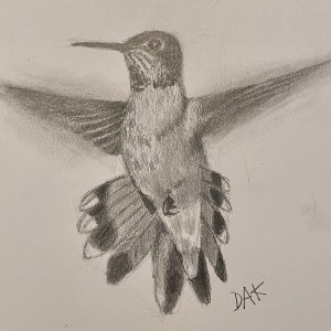 Hummingbird Drawing Project with Deb Kirkeeide