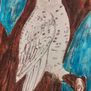 Snowy Owl Drawing Project