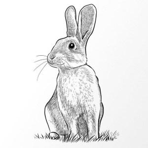 Rabbit Drawing Project