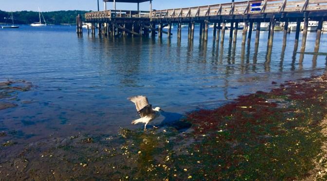 Scene Around: Gull on the River Beach