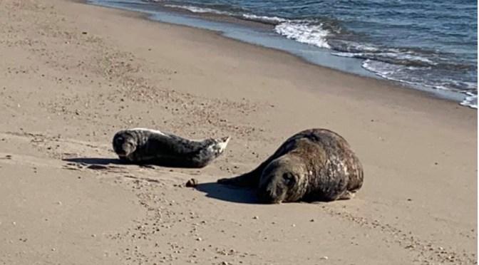 Scene Around: Seals on the Beach