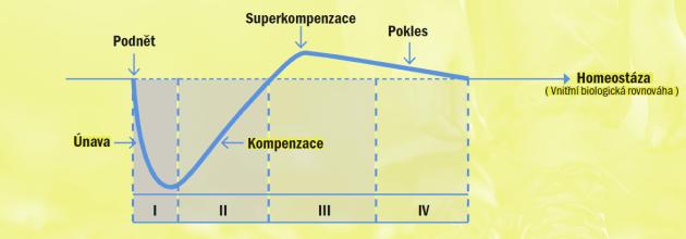 superkompenzace