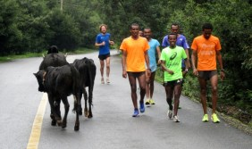 Run Africa Ethiopia visiting runner Shaun from Holland enjoying the natural surroundings of Addis Ababa