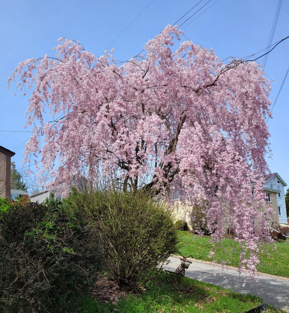 Spring in the Almost Suburbs