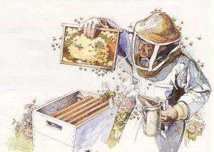 beekeeper sketch